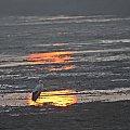 listopad 2011, samotny, młody, tegoroczny bocian, który nie odleciał... #bociany #ptaki