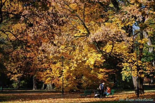 Niedzielne popołudnie w parku