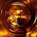 II - Gwiezdne wrota #GwiezdneWrota #DomoweInspiracje #pająk