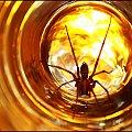 III - Gwiezdne wrota #GwiezdneWrota #DomoweInspiracje #pająk
