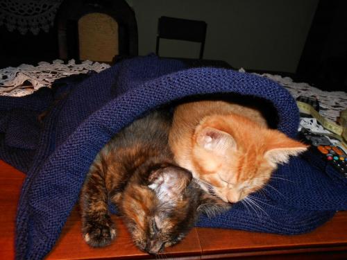 Moje mruczaki ! #koty #pomoc #sweter