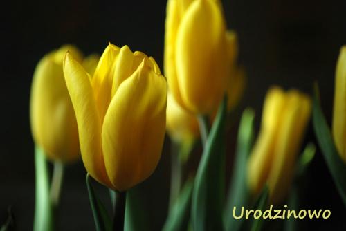 """Dla Krzysztofa """"krfkoza"""" z najlepszymi życzeniami urodzinowymi :)"""