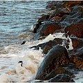 Fale rozbijając się o kamienie przybierają różne kształty ... tym razem karnawałowo :) #Kołobrzeg #plaża #karnawał #taniec #kamienie #fala