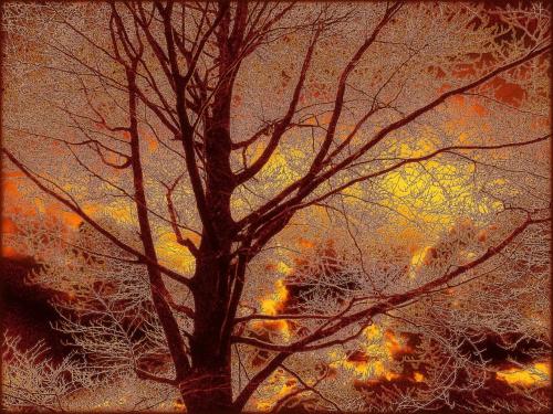 Drzewo II