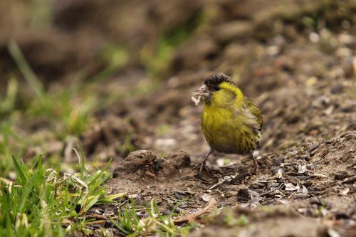 Hej ! ja ci się w talerz nie gapię ! #ptaki