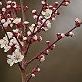 wiosny wokół pełno... ech... czasu na jej obserwowanie mało:)