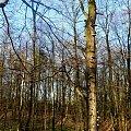 z niedzielnej wycieczki :)) #drzewa #krajobraz #las #przyroda #woda