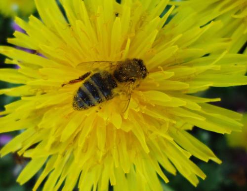 Pracowita pszczółka.
