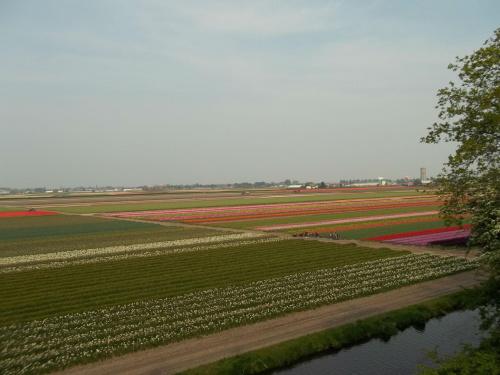 Keukenhof - Holandia