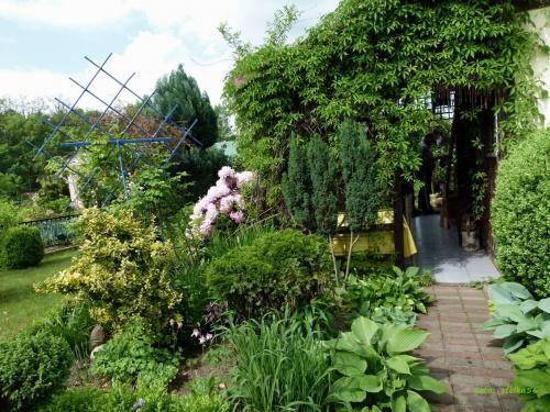 maj w moim zaczarowanym ogrodzie :)) #działka #kwiaty #maj #ogród #wiosna