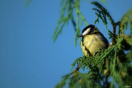 #lato #lipiec #przyroda #ptaki