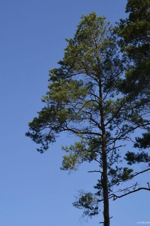 #drzewa #las #lato #przyroda