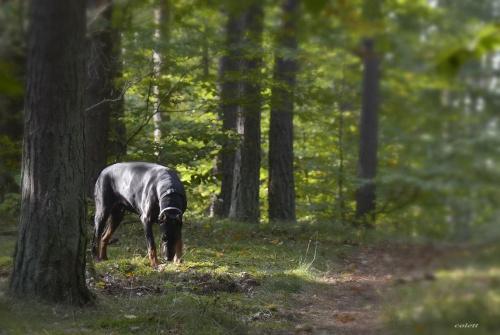 Colett #jesień #las #pies