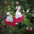 kurki na klombie #kwiaty #widoki