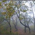 jesień i mgła #mgła