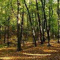 jesiennie ... #ArboretumBramyMorawskiej #jesień #przyroda #RacibórzObora
