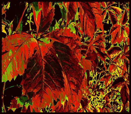 jesienna farba spłynęła już z liści #jesień #liście
