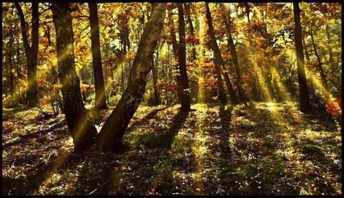 spacerkiem po jesiennym lesie #las #jesień #natura