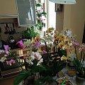w kąpieli #Phalaenopsis