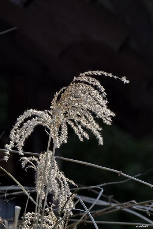 #ogród #przyroda #zima