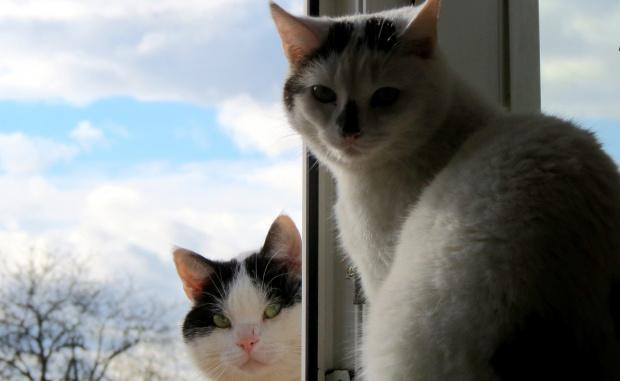 Kot okienny i kot zaokienny ;-)