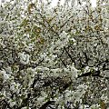 #drzewa #kwiaty #wiosna