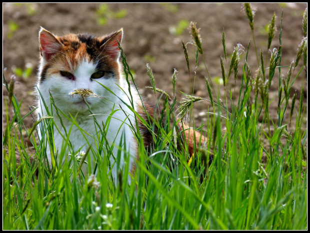 z trawa na nosie #kwiaty