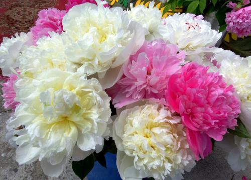 ... taki sobie, pachnący bukiecik ... :) #kwiaty #piwonie #wiosna