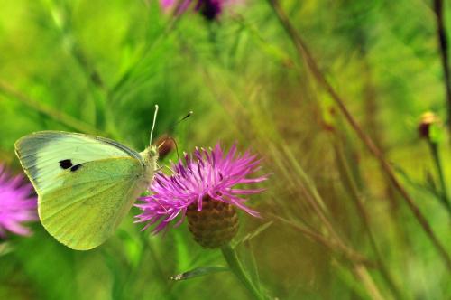 Motyl i kwiatek...klasyk
