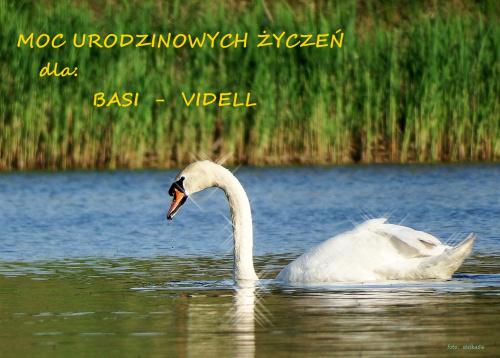 Basiu, żyj w szczęściu i radości ... :) :) #łabędzie #NaStawie #ptaki #urodziny #życzenia